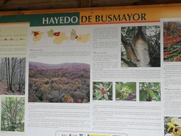 Hayedo de Busmayor